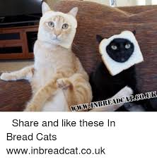 Cat In Bread Meme - wwwsinbreadcaizgo uk share and like these in bread cats ツ
