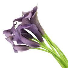 purple lilies purple mini calla lilies