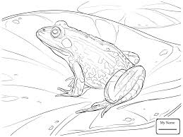 coloring pages for kids frogs leaping frog amphibian coloring7 com