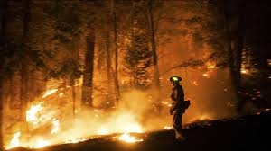 Wildfire Yosemite 2013 by Firefighters Struggle To Contain Fire Near Yosemite National Park