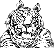 tiger drawings are easy to draw using simple basic shapes