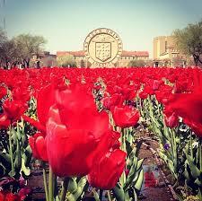 Makeup Schools In Texas Best 25 Texas Tech University Ideas On Pinterest Texas Tech