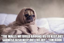Sad Pug Meme - you ve heard of grumpy cat but what about sad pug imgur
