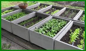 garden talk u2013 vegetable gardens u2026 getting started tropical