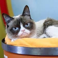 Create A Grumpy Cat Meme - 78 best grumpy cat images on pinterest cat memes funny memes
