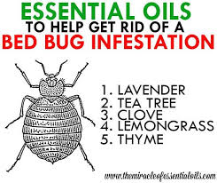 natural bed bug remedies essential oils for bed bugs essential oils natural remedies