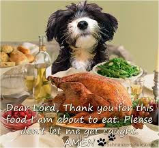 thanksgiving prayers and safety tips for dogs holidays