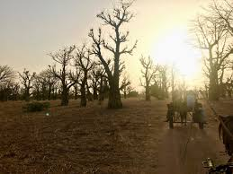 the baobab posts trees for the future