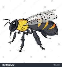 bee drawing vector stock vector 310248365 shutterstock
