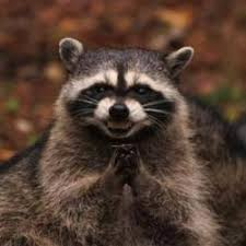 Raccoon Meme - evil plotting raccoon meme generator