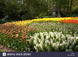 keukenhof flower gardens netherlands flower garden champsbahrain com