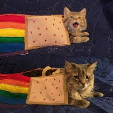 Nyan Cat Meme - i can has cheezburger nyan cat funny animals online cheezburger