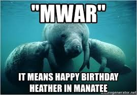 Manatee Meme - mwar it means happy birthday heather in manatee manatee meme