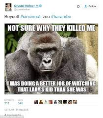 Gorilla Meme - kaley cuoco and ricky gervais lead tributes to harambe the gorilla