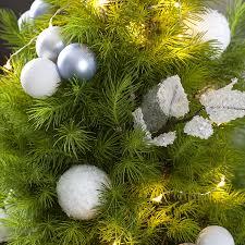 snowy day tree at jackson u0026 perkins
