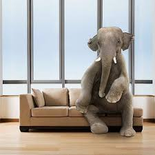 elephant in the living room an elephant in the living room on elephants in the living room com