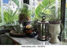 a small glass terrarium with plants inside stock photo royalty