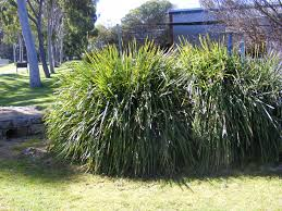 australian native plant species news and events