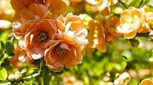 Gold Flowers Flower Spring Orange Flirtation Gold Flowers Butterfly Fleurs