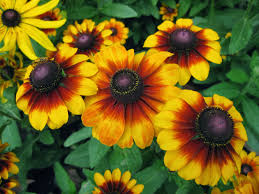 Summer Garden Plants - 25 types of flowers to plant for summer summer flowers