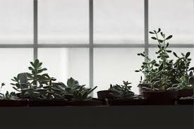 t5 grow light fixtures find all the information about t5 grow lights