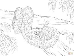 yellow anaconda coloring page free printable coloring pages