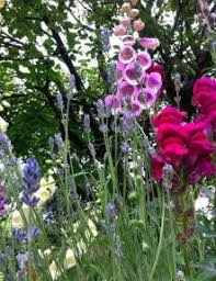 23 beautiful cottage garden flowers ideas more diy ideas