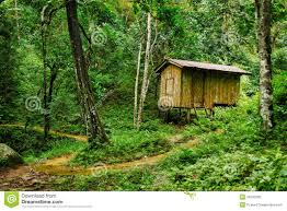 wooden small house in a tropical forest royalty free stock image