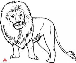lion drawing outline lions coloring pages free coloring pages