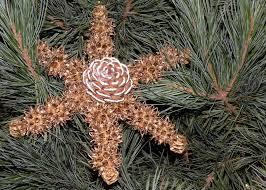 homeschooling just next door ornaments from nature