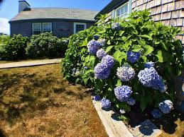 Nantucket Cottages For Rent by 3br Cottage Vacation Rental In Nantucket Massachusetts 287226