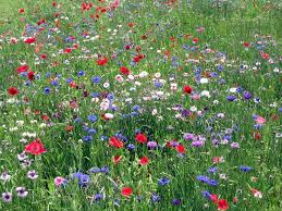 76 best beautiful wildflowers images on pinterest nature wild