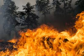 Wildfire Near Markleeville Ca by Wildfires Burning Through Several Western States Causing