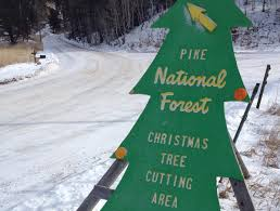 national forests open for annual christmas tree cutting krcc