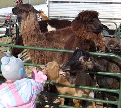 farm animals u0026 petting zoo whispering pines mobile zoo