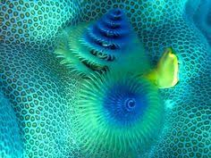 christmas tree worm by christian loader fibonacci fractals and