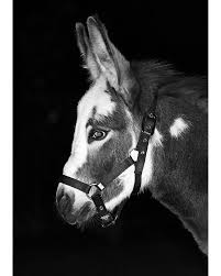 i love this photo of my in black and white