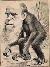 human evolutionary theory