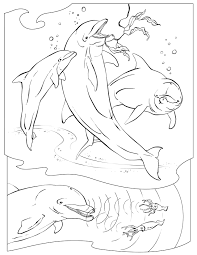 of the blue dolphins coloring pages