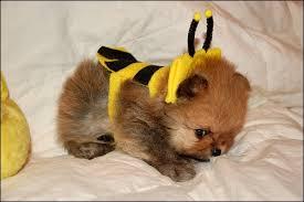 Halloween Dog Costume 4 Cutest Dog Halloween Costumes