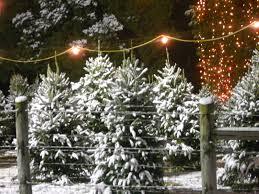 green acres farm cary nc fraser fir christmas trees winter