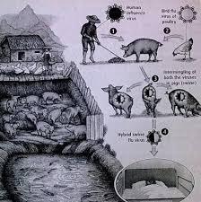 how did swine influenza virus siv originate and how did it get