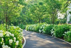 driveway plants ideas landscape traditional with curved driveway