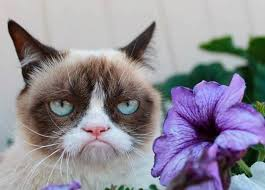 Grumpy Cat Meme Images - grumpy cat meme finally says yes to something a hollywood movie