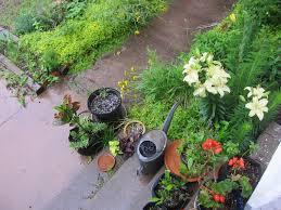 native oklahoma plants garden
