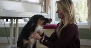 commercials with australian shepherds and her dog sitting in a well lit room australian shepherd