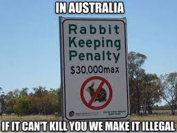 Aussie Memes - 27 hilarious australia memes that perfectly describe living down under