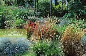 gap gardens ornamental grass border with imperiata cylidrica
