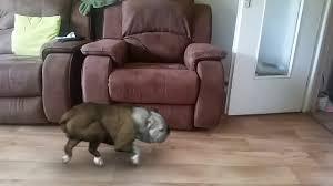 qui urine sur canapé bad chien qui urine sur mon canapé