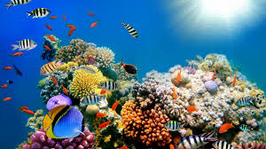 colorful fish sea creature high quality hd wallpapers hd famous